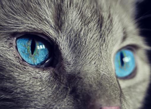 Koty zarazone koronawirusem
