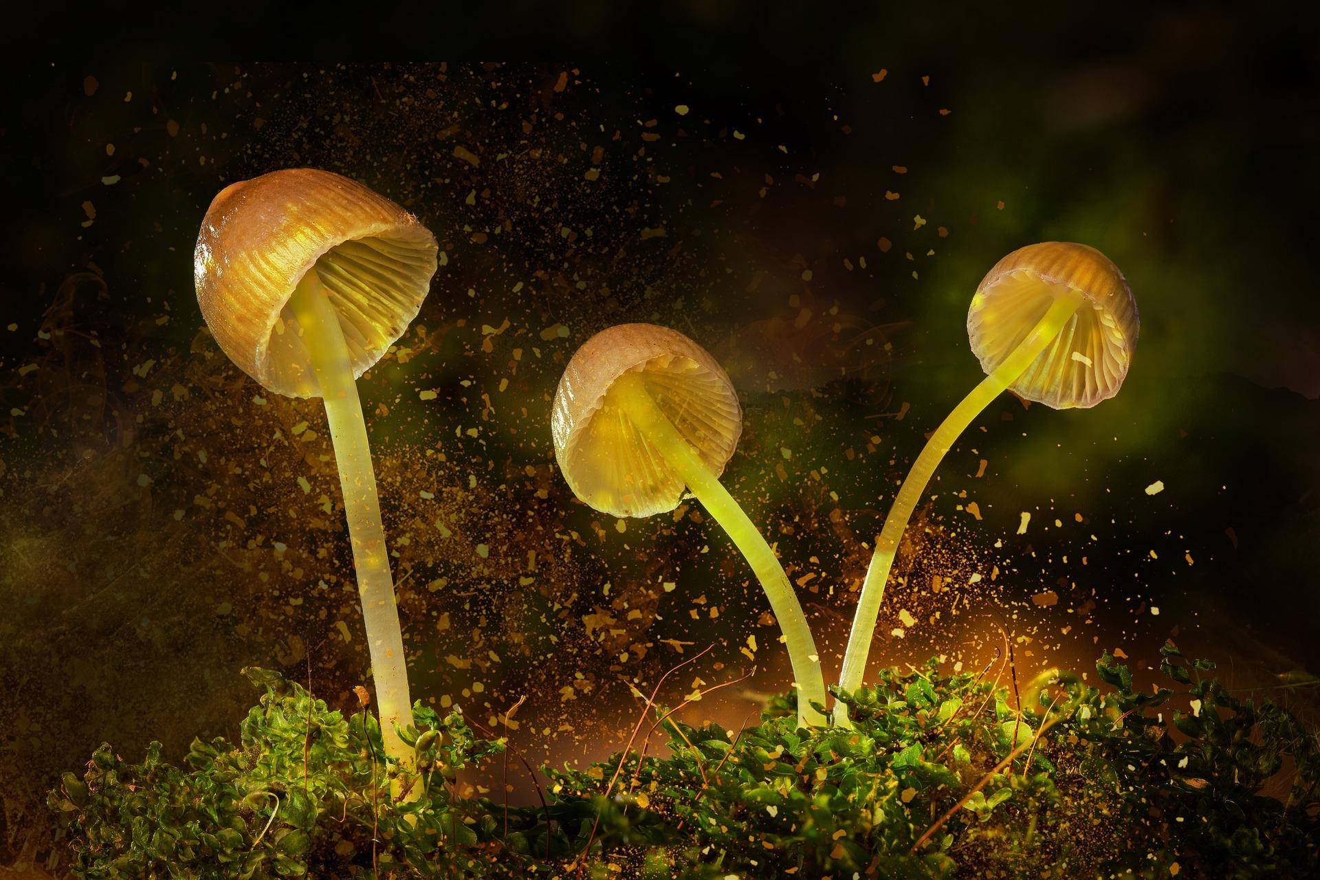 Naukowcy zmodyfikowali swiecace rosliny