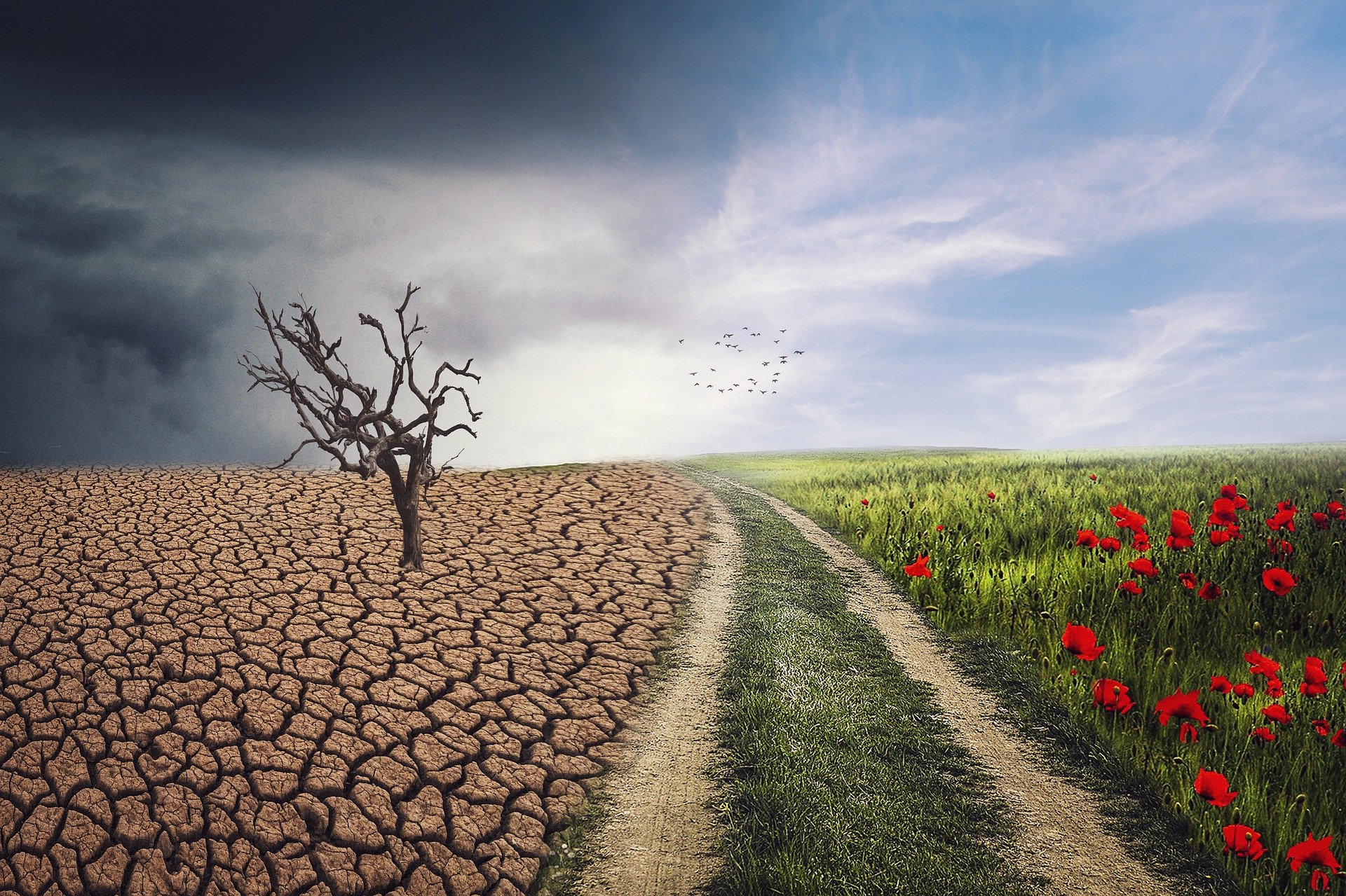 Badania klimatyczne przewiduja katastrofalne upaly